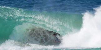 Sheldon Simkun, Snapper Rocks, Austrália