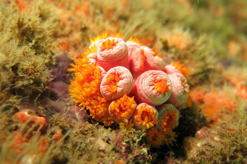 Corais são um ecossistema de imensa diversidade de animais e vegetais importantes para o equilíbrio ambiental.