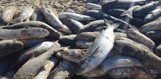Pesca atinge cota