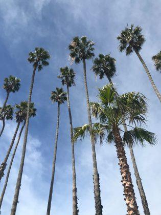 Palms, Califórnia (EUA). Foto: Arquivo pessoal.