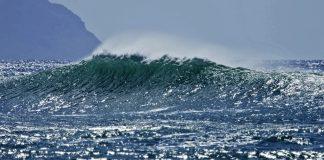 Conservação marinha em pauta