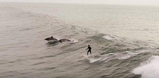 Encontro com golfinhos