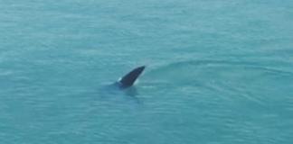 Tubarão avistado em Bertioga