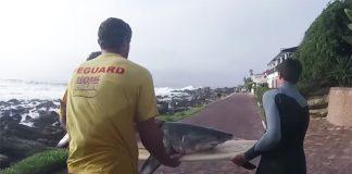 Surfistas salvam tubarão
