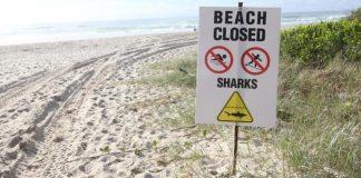 Tubarão ataca em Port Alfred