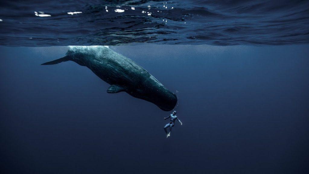 Poluição sonora afeta animais que utilizam o som para se orientar no oceano.