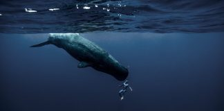 Viagem subaquática