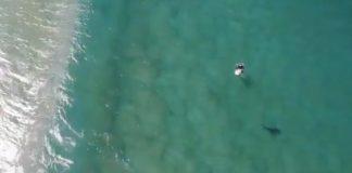 Tubarão à espreita