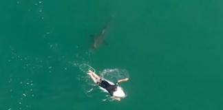 Tubarão ronda Wilko