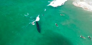 Baleias dividem o pico
