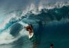 Fera à solta no Taiti