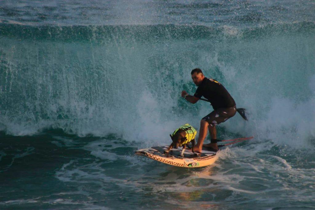 Cão Parafina e seu dono Augusto Martins participam da categoria Surf Dog.