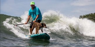 Surfe canino é a pedida