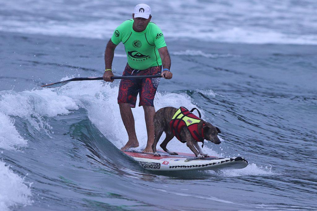Categoria Surf Dog é atração à parte no evento em Camburi.