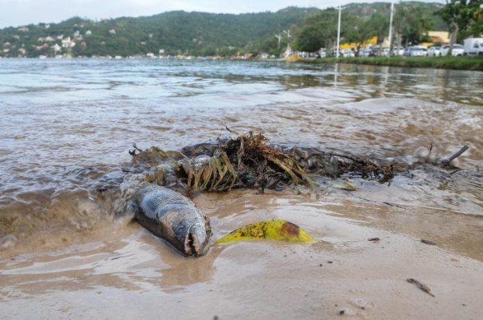 Estima-se que cerca de três toneladas de animais morreram, entre peixes, crustáceos e bivalves.