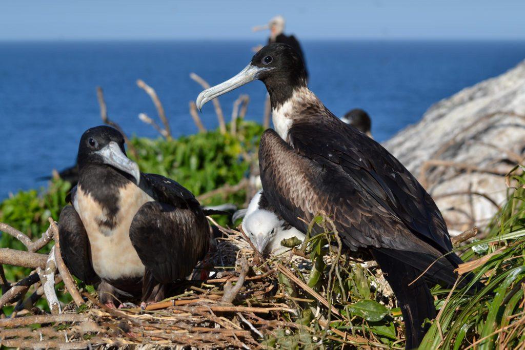 Ilhas fazem parte da rota de aves que migram e constroem ninhos no local.