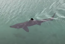 Tubarão interrompe aula