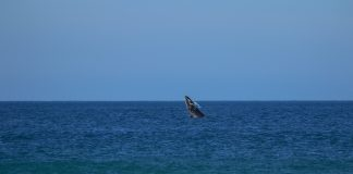 Baleia visita o crowd