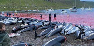 Matança de golfinhos em série