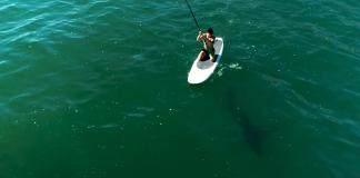 Orlando Bloom encontra tubarão