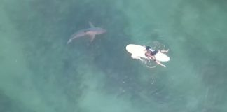 Rodeados por tubarões
