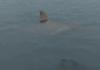 23 tubarões avistados