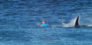 Reencontro com tubarões