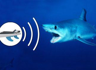 Repelente de tubarão