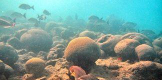 Tempo de silêncio nos oceanos