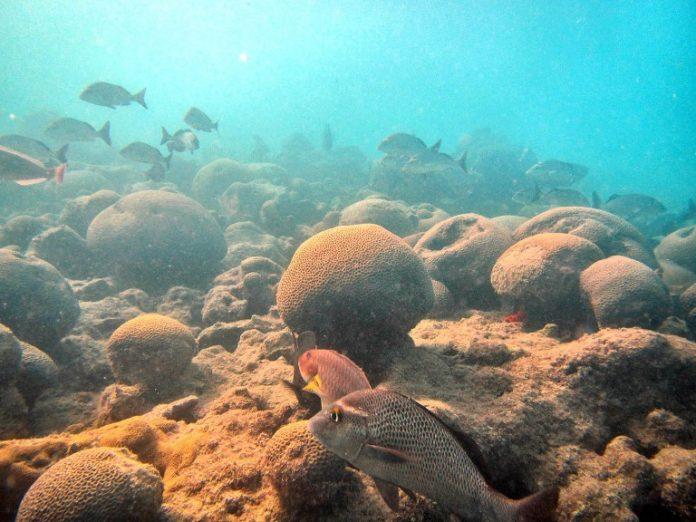 Pesquisadoresavaliam como décadas de escalada na poluição sonora impactou o ecossistema marinho.