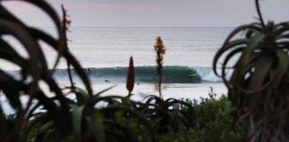 Tubarão ataca surfista
